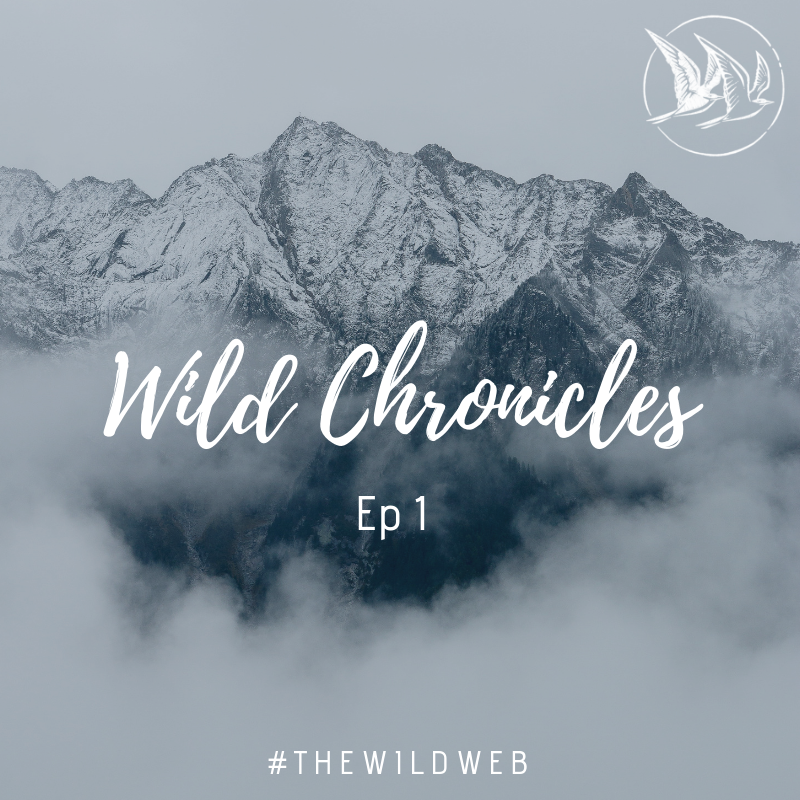 Wild Chronicles #1 – Sauter le pas en devenant indépendant