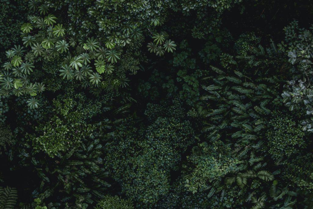 Image de jungle - illustration charte éthique