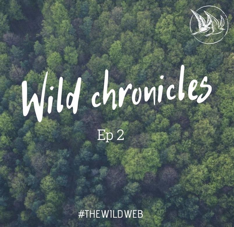 Wild Chronicles #2 – Le bilan de ma première année en freelance