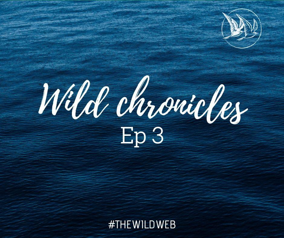 Wild Chronicles #3 – Etre engagé.e.s, ça veut dire quoi ?